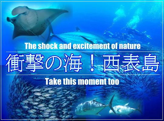 衝撃の海!自然の宝庫!西表島6ボートレンタル食事付